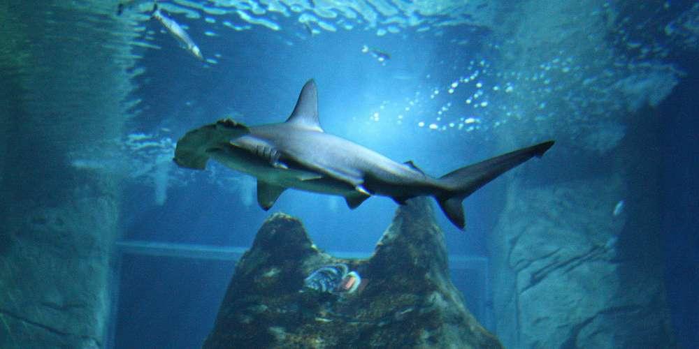 aquarium de biarritz activités quoi faire à biarritz